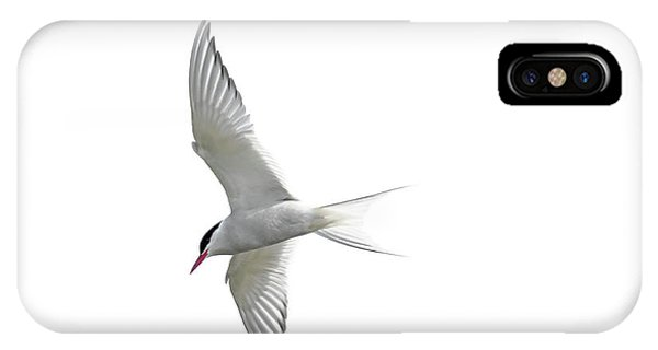 Arctic Tern Flying In Mist IPhone Case