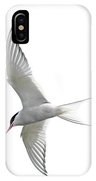 Arctic Tern Flying In Mist IPhone Case