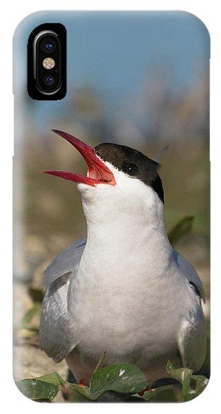 IPhone Case featuring the photograph Arctic Tern - St John's Pool, Scotland by Karen Van Der Zijden