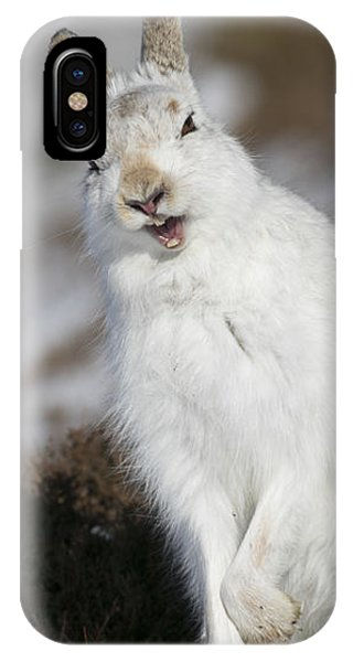 Are You Kidding? - Mountain Hare #14 IPhone Case