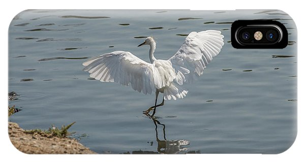 Are You Ready To Dance - Great Egret In Mtn View Ca IPhone Case