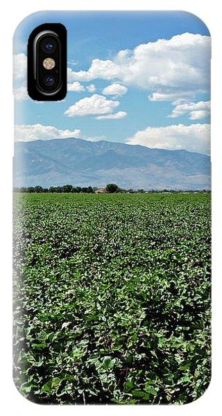 Arizona Cotton Field IPhone Case