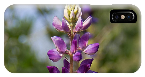 iPhone Case - Arizona Lupine by Kelly Holm