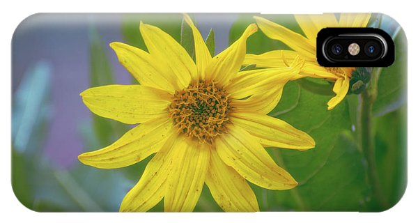 IPhone Case featuring the photograph Arrowleaf Balsamroot by Jason Coward