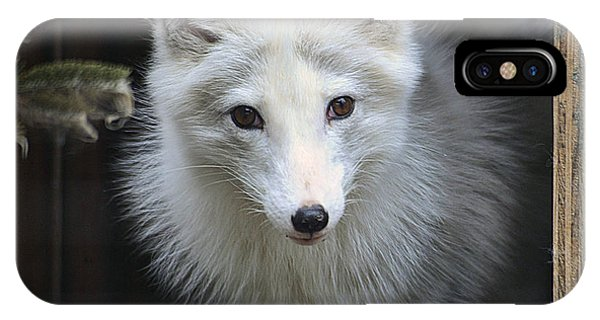 Artic Fox IPhone Case
