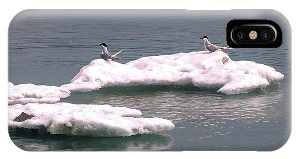 Arctic Terns On A Bergy Bit IPhone Case