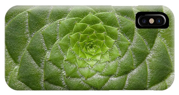 Artistic Nature Green Aeonium Cactus Macro Photo 203 IPhone Case
