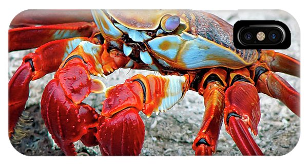 Artistic Nature Red And Blue Rainbow Crab 908 IPhone Case