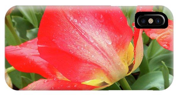 Sun Lights Tulips After Spring Rain IPhone Case