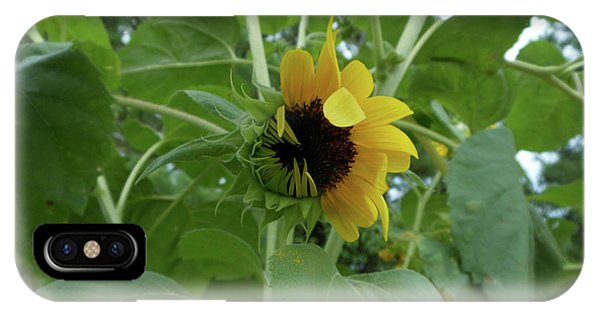 Sunflower Rising IPhone Case