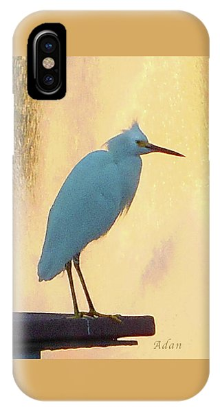 Birds And Fun At Butler Park Austin - Birds 3 Detail Macro IPhone Case