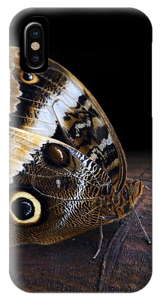 Yellow-edged Giant Owl Butterfly IPhone Case