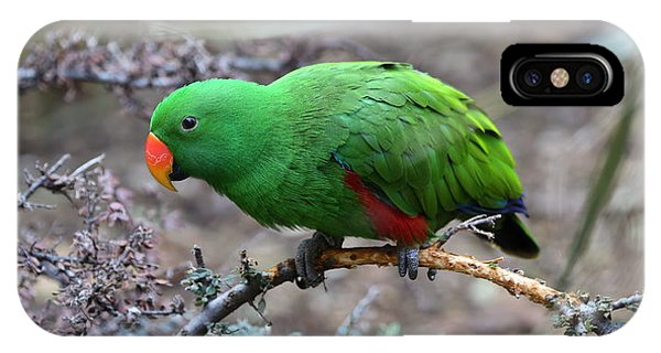 Green Male Eclectus Parrot IPhone Case