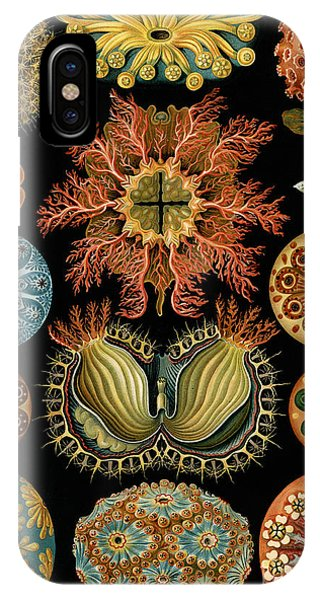 Beauty In Nature iPhone Case - Ascidiae by Ernst Haeckel