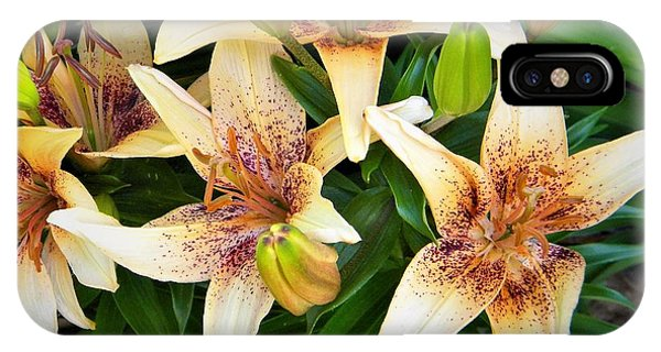 Asiatic Lilies IPhone Case