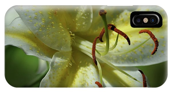 Asiatic Lily No 2 IPhone Case