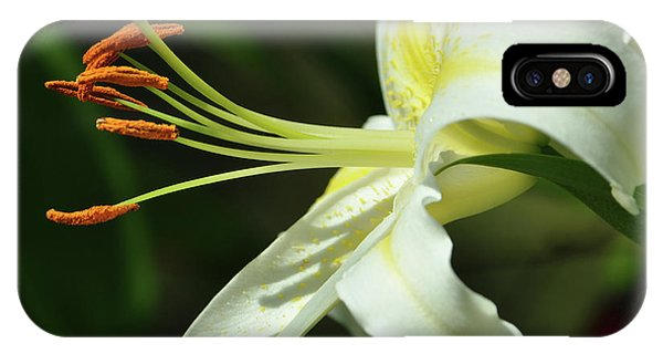 Asiatic Lily No 3 IPhone Case