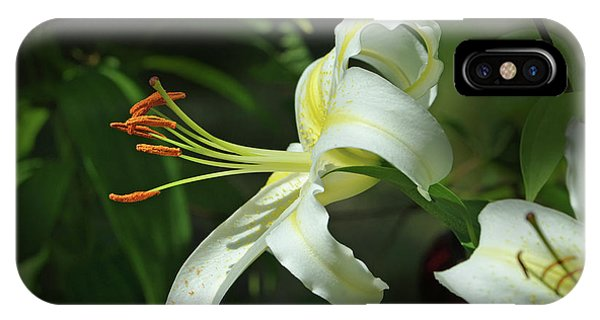 Asiatic Lily No 4 IPhone Case