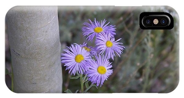 Aspen Asters  Phone Case by Michael Shaft