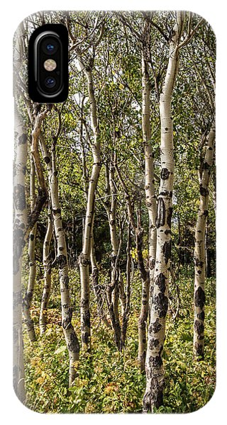 IPhone Case featuring the photograph Aspen Delight At Glacier by Lon Dittrick
