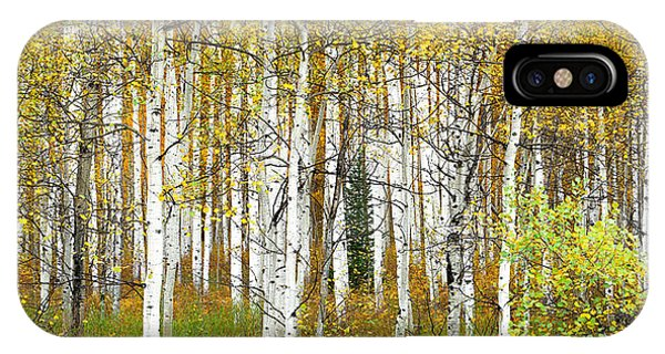 Aspen Forest Panoramic IPhone Case