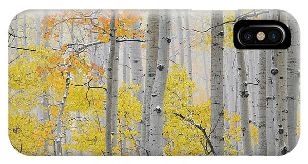 Aspen Forest Texture IPhone Case