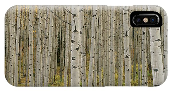 Aspen Grove In Fall, Kebler Pass IPhone Case