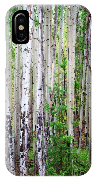 Aspen Grove In The White Mountains IPhone Case