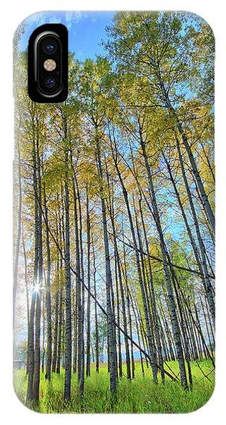 Aspen Grove IPhone Case
