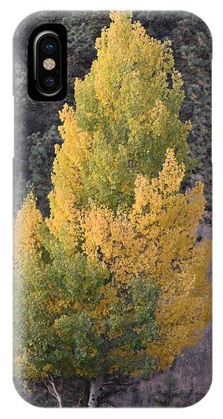 Aspen Tree Fall Colors Co IPhone Case