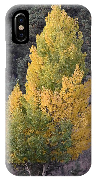 Aspen Tree Fall Colors Co IPhone Case