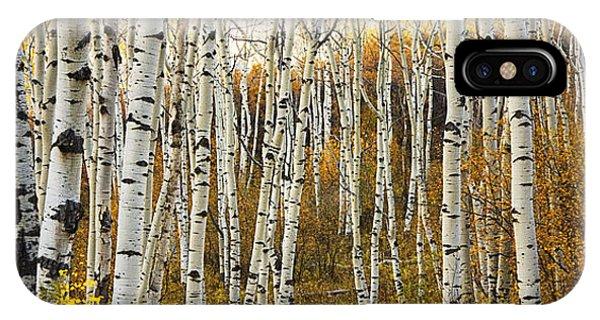 Aspen Tree Grove IPhone Case