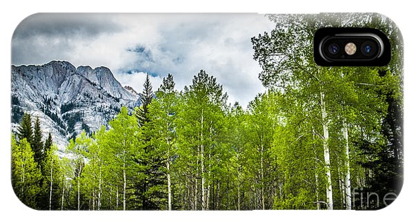 Aspen Trees Canadian Rockies IPhone Case