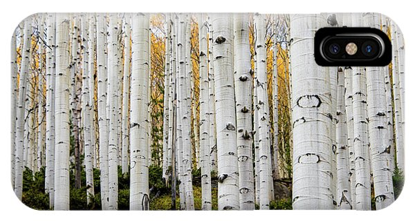 Aspens And Gold IPhone Case