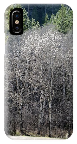 Aspens In Morning Light IPhone Case