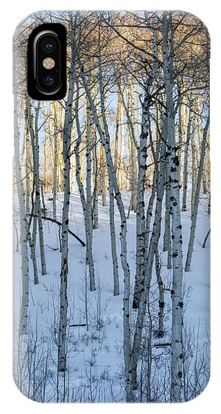 IPhone Case featuring the photograph Aspens In Shadow And Light by Denise Bush