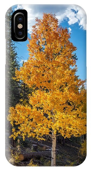Aspen Tree In Fall Colors San Juan Mountains, Colorado. IPhone Case