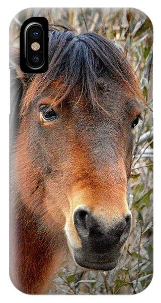 Assateague Island Pony Patricia Irene IPhone Case