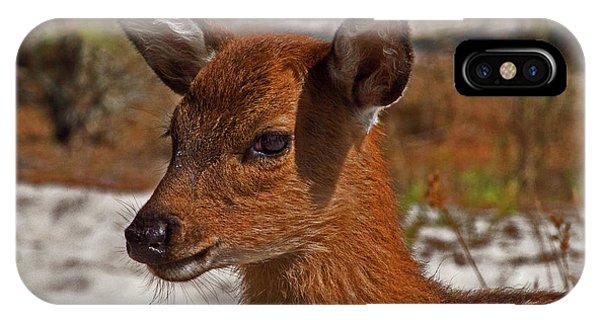 Assateague Island Sika Deer Fawn IPhone Case