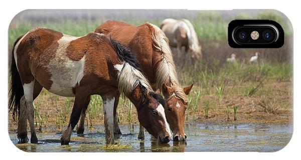 Assateague Ponies Tale Drink IPhone Case