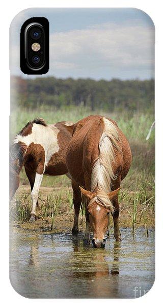 Assateague Pony Pair IPhone Case