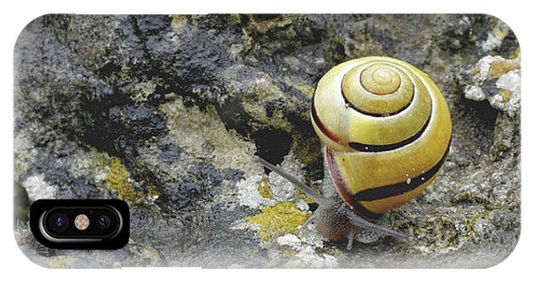 At A Snail's Pace IPhone Case