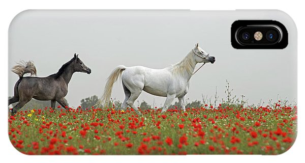 At The Poppies' Field... IPhone Case