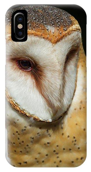 Athena The Barn Owl IPhone Case
