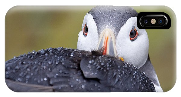 Atlantic Puffin With Rain Drops IPhone Case
