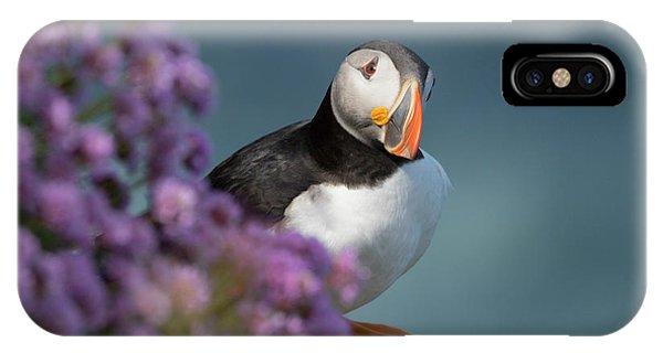 Atlantic Puffin - Scottish Highlands IPhone Case