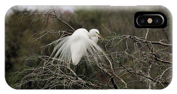 Attractive Plumage IPhone Case