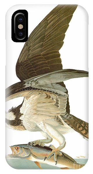 Osprey iPhone Case - Audubon: Osprey by Granger