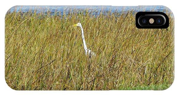 Audubon Park Sighting IPhone Case