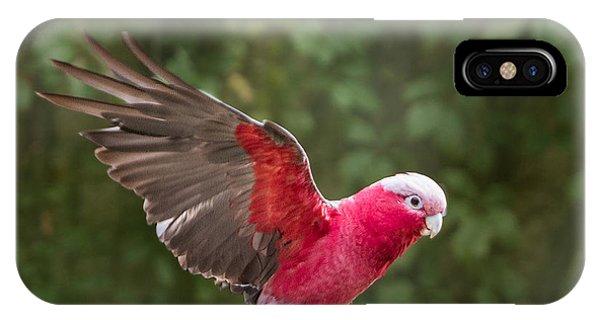 Australian Galah Parrot In Flight IPhone Case